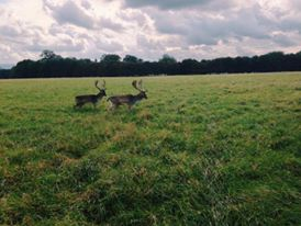 Phoenix Park, Dublin Travel Diaries